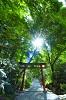 【月極・定期購入タイプ】日本の神さまプレミアム月別ヒーリング